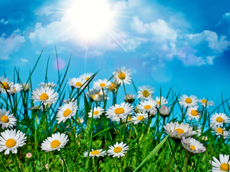 Summer-Flower-Wallpapers